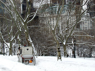 Carriage Snow, Central Park